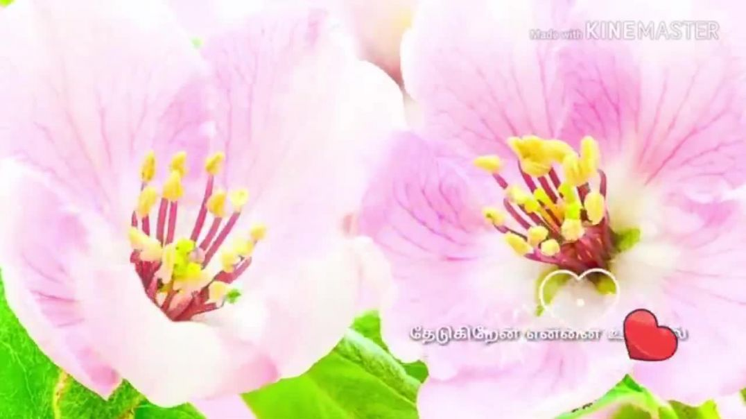 Best Good Morning Videos Download   Tamil WhatsaApp Video Download