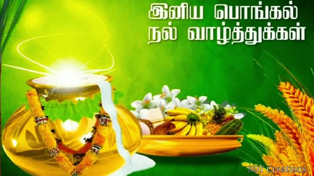 Tamil status | Download Happy Pongal Whatsapp Video