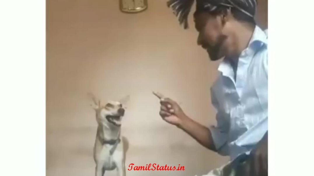 Boy vs Dog Tik Tok WhatsApp Status Download Videos in Tamil