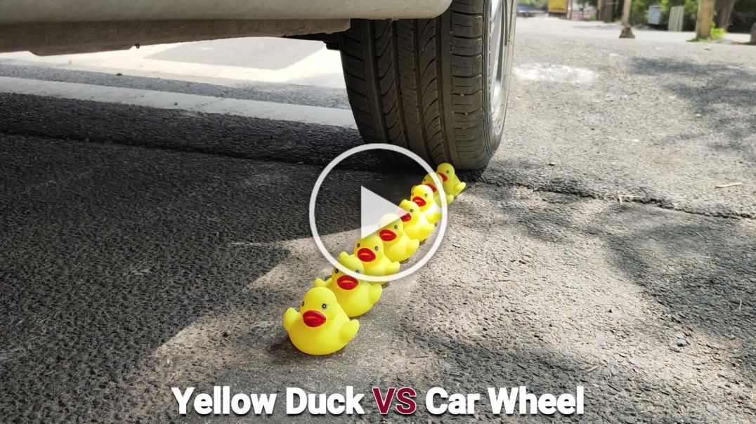 Yellow Duck Vs Car Wheel Experiment